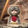 貓戴金箍圖片高清動態壁紙大全下載  v1.0.0